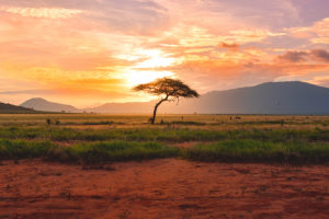 Africa | Expotur Viaggi
